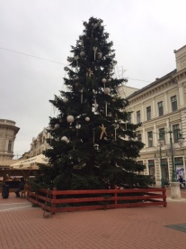 This tree is in the heart of the shopping district of Szeged: Karasz utca